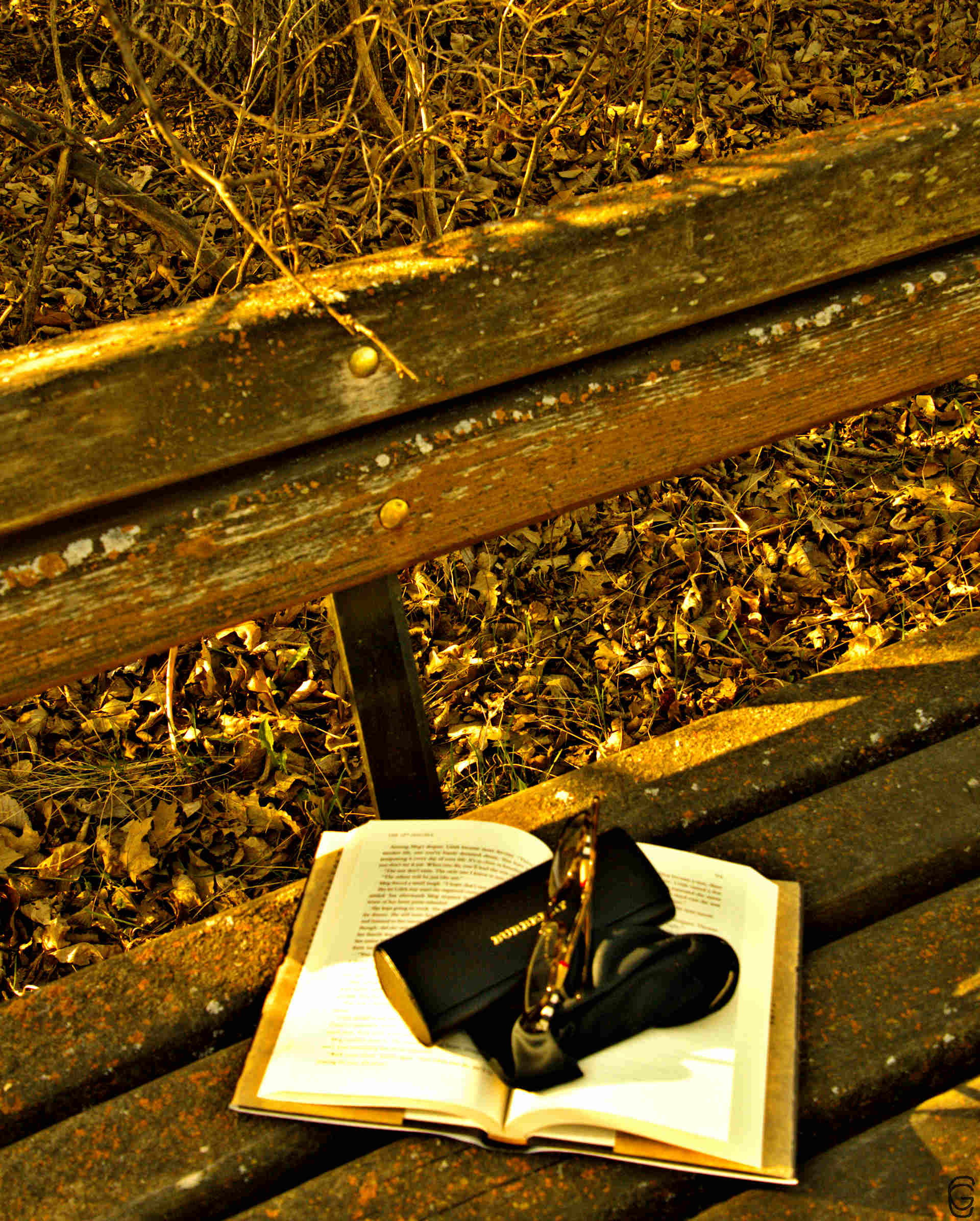 Park reading photoblog - Week of July 9th to July 13th. A week with nature … reader's style … Monday mood.